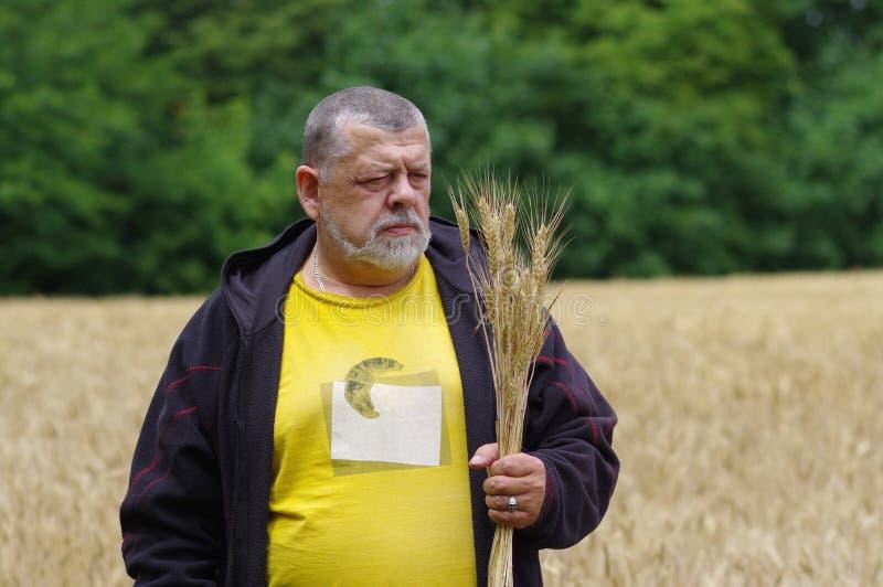 Stående av en bonde som ser på spikelets för ett vete fotografering för bildbyråer