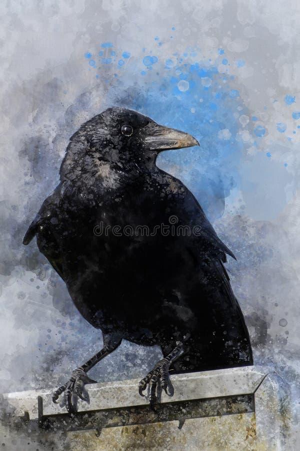 Stående av en galandefågel, vattenfärgmålning Fågelillustration royaltyfri illustrationer