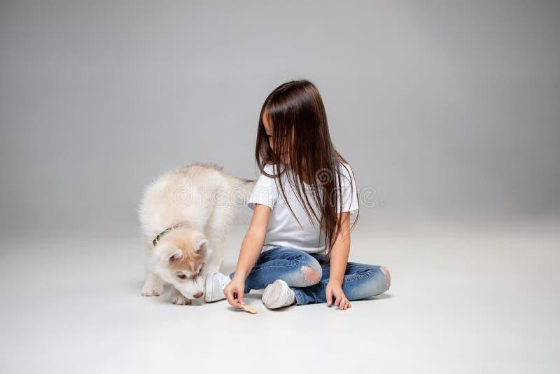 Stående av en glad liten flicka som har gyckel med den siberian skrovliga valpen på golvet på studion royaltyfri fotografi