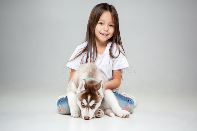 Stående av en glad liten flicka som har gyckel med den siberian skrovliga valpen på golvet på studion royaltyfria bilder