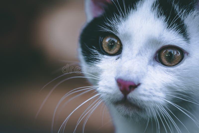 Stående av en gullig liten kattunge arkivbilder