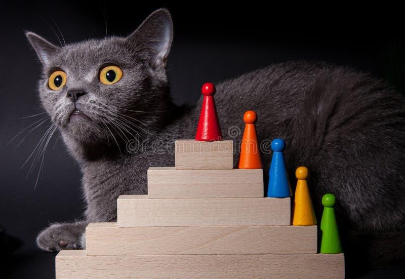 Stående av en härlig Dritish katt arkivbilder