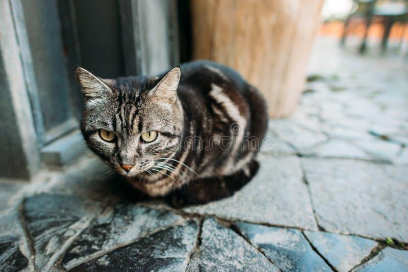 Stående av en härlig katt på gatan royaltyfri foto
