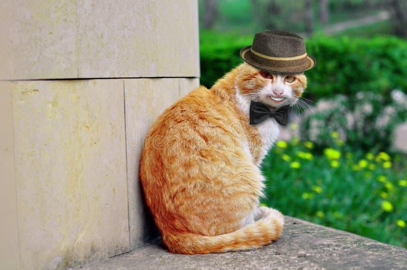 Stående av en härlig rolig katt i en hatt och med en fjäril som ler konstigt fotografering för bildbyråer