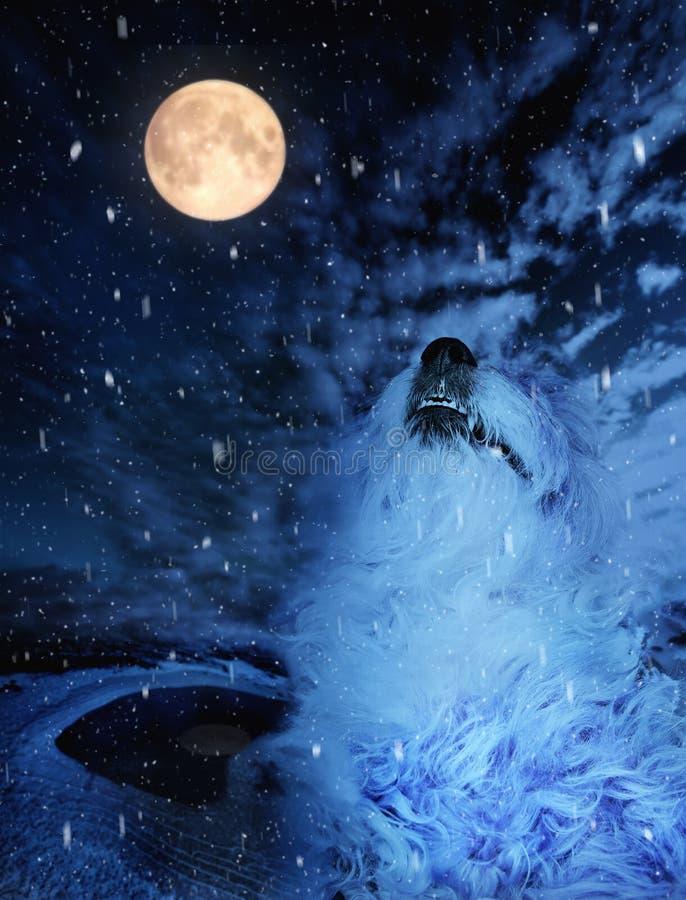 Stående av en hund som tjuter över fullmånen i vinter arkivbild