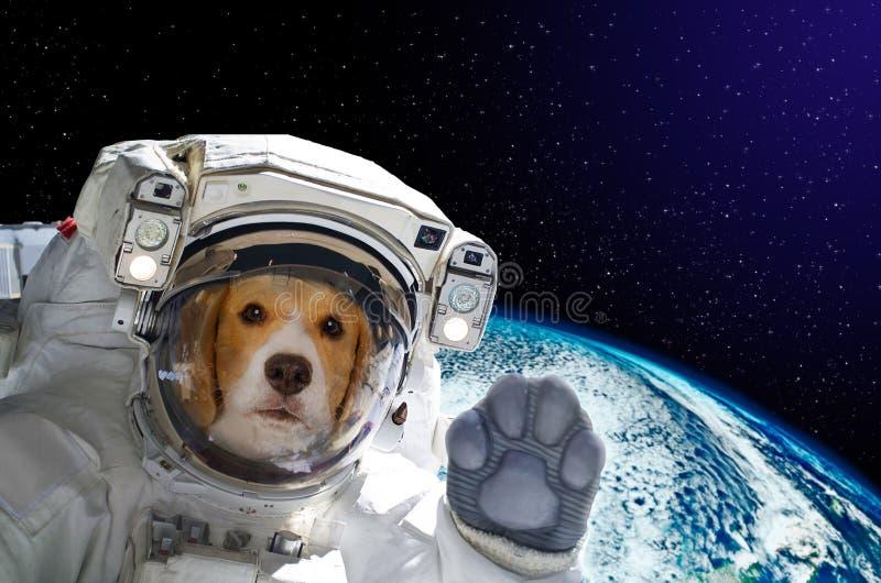 Stående av en hundastronaut i utrymme på bakgrund av jordklotet royaltyfri foto