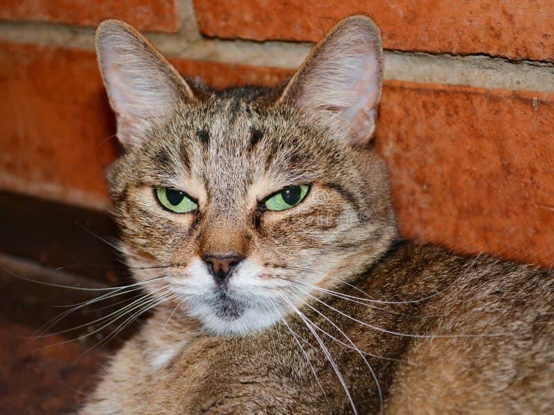 Stående av en katt royaltyfri fotografi