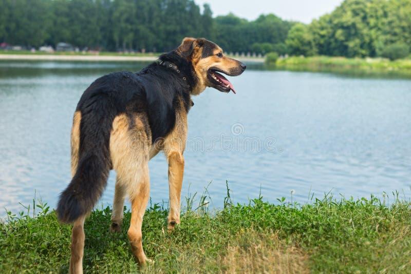 Stående av en ledsen tillfällig hund arkivbild