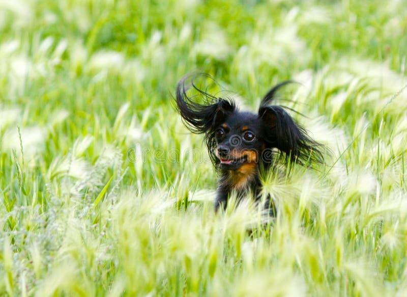 Stående av en lycklig hund i gräset arkivfoto