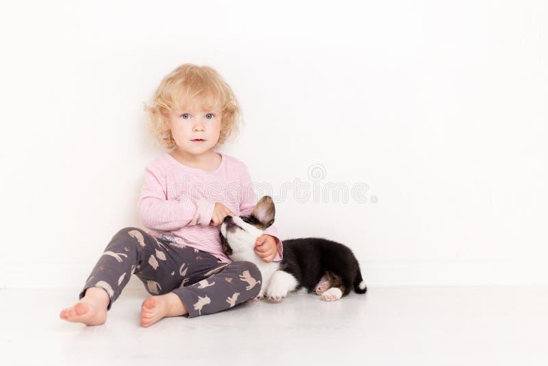 Stående av en lycklig lockig gullig Caucasian liten flicka hemma med en valp för welsh corgikofta som in spelar på golvet arkivbilder