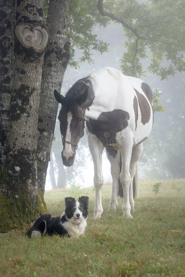 Stående av en målarfärghäst och en Border collie hund i en dimmig skog arkivfoton