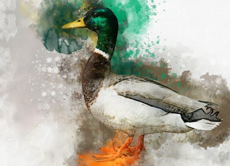 Stående av en manlig lös and, vattenfärgmålning Fågelillustration vektor illustrationer