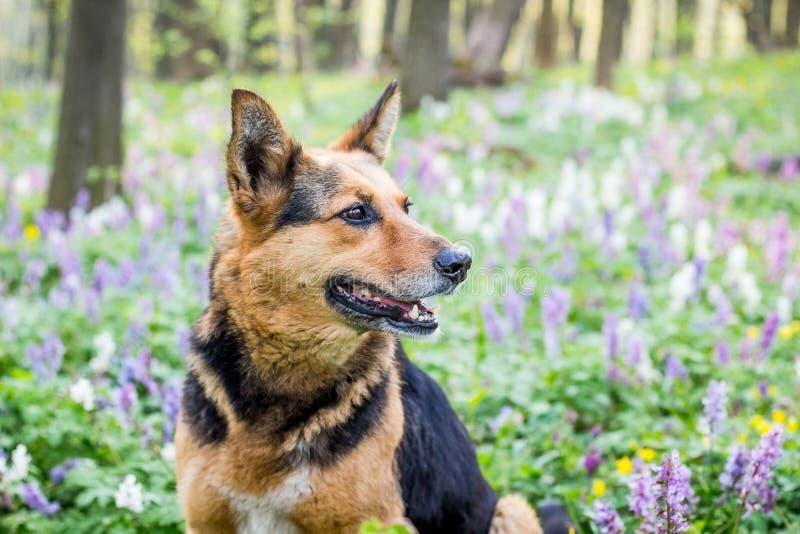 Stående av en närbildhund i en vårskog på en bakgrund av flowers_ arkivfoton
