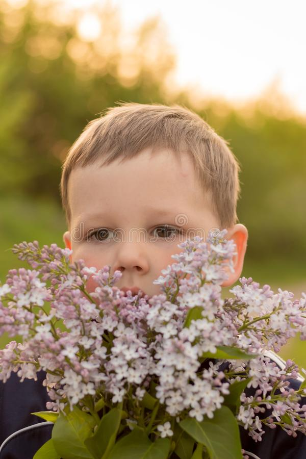 Stående av en pojke med lilan bukett av den purpurfärgade lilan i barns händer händer som rymmer en purpurfärgad lila, blommar bu royaltyfria bilder