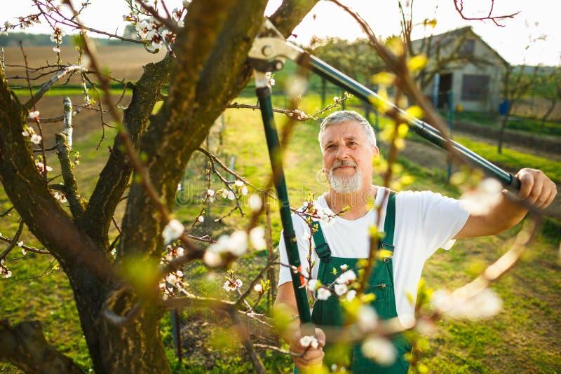 Stående av en stilig hög man som arbeta i trädgården i hans trädgård arkivfoton
