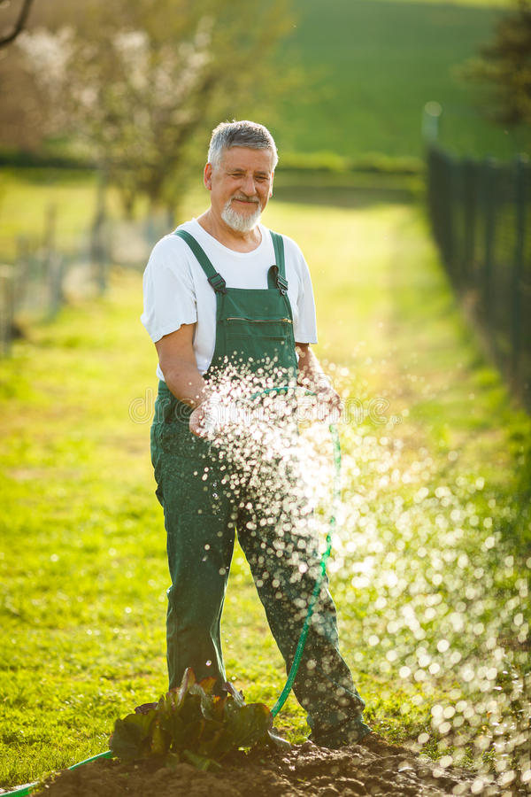 Stående av en stilig hög man som arbeta i trädgården i hans trädgård arkivbilder