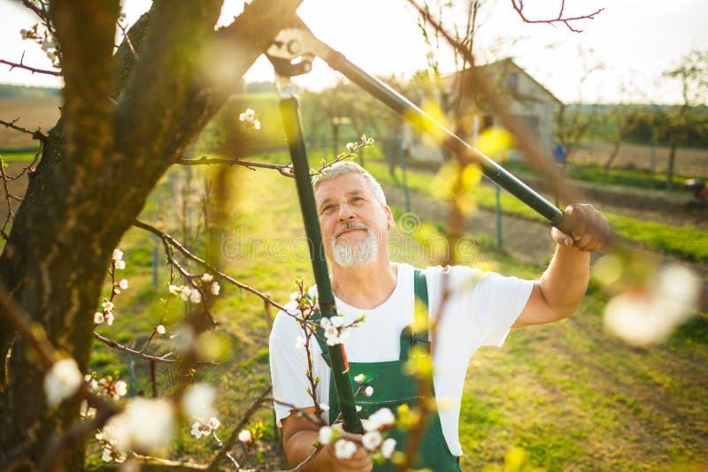 Stående av en stilig hög man som arbeta i trädgården i hans trädgård royaltyfria foton