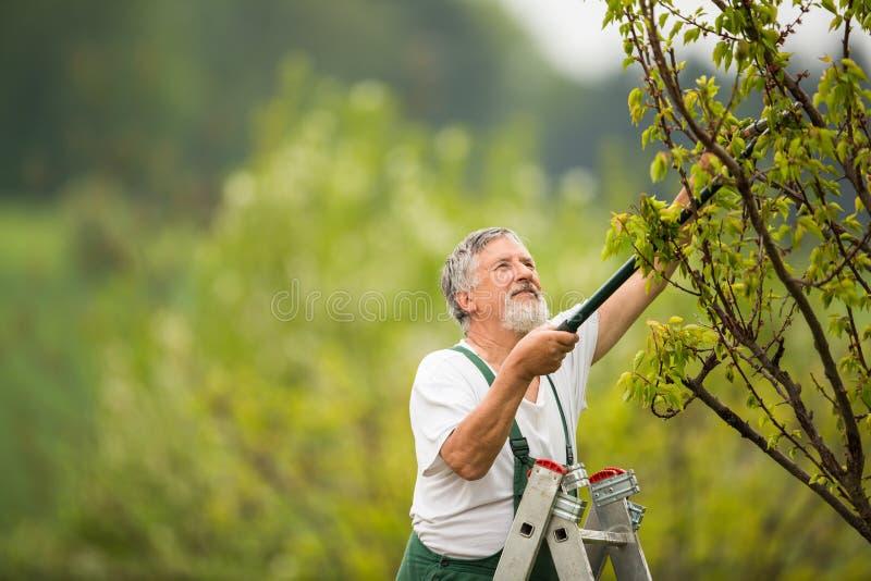 Stående av en stilig hög man som arbeta i trädgården i hans trädgård royaltyfri foto