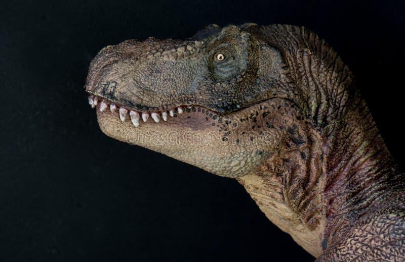 Stående av en tyrannosarierex på svart bakgrund royaltyfria bilder