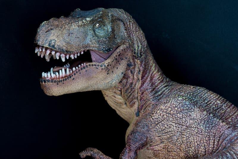 Stående av en tyrannosarierex på svart bakgrund arkivfoton