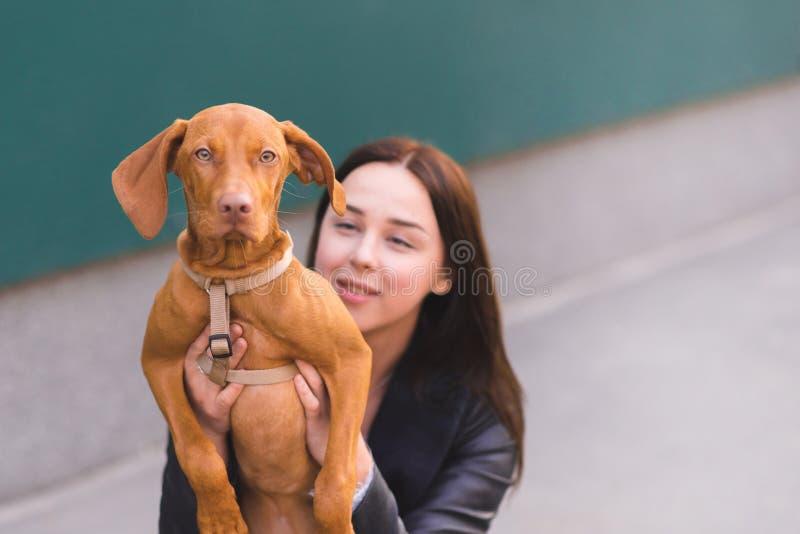 Stående av en ung härlig hund och flicka Ägaren kramar en valp, medan gå runt om staden royaltyfri fotografi