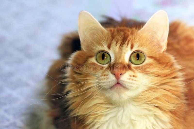 Stående av en ung katt arkivfoto