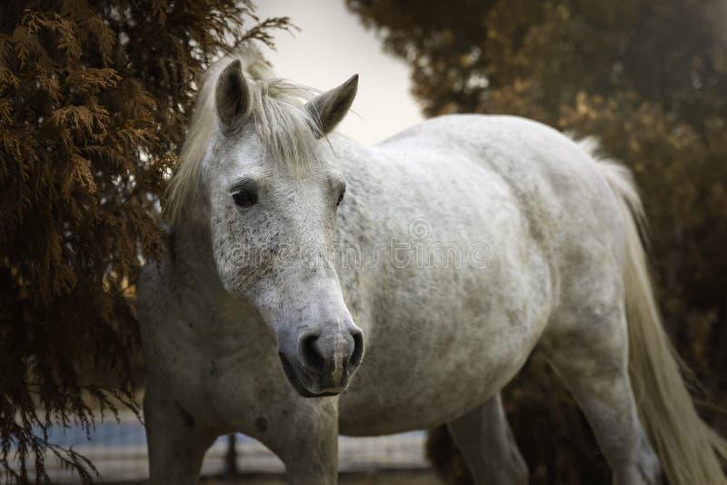 Stående av en vit häst i en trädgård i höst arkivfoto
