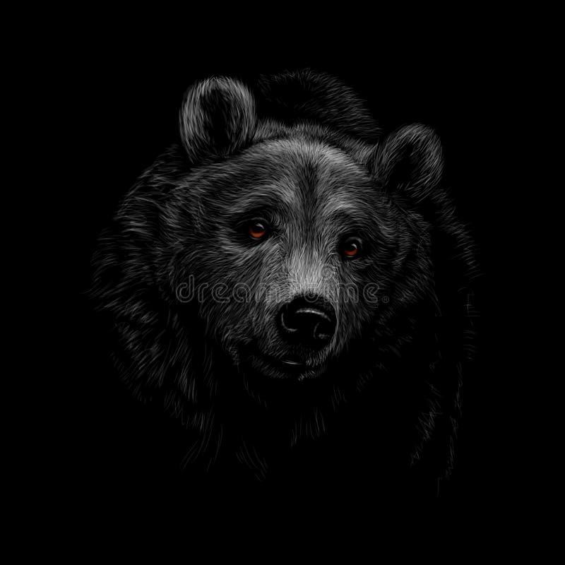 Stående av ett brunbjörnhuvud på en svart bakgrund stock illustrationer