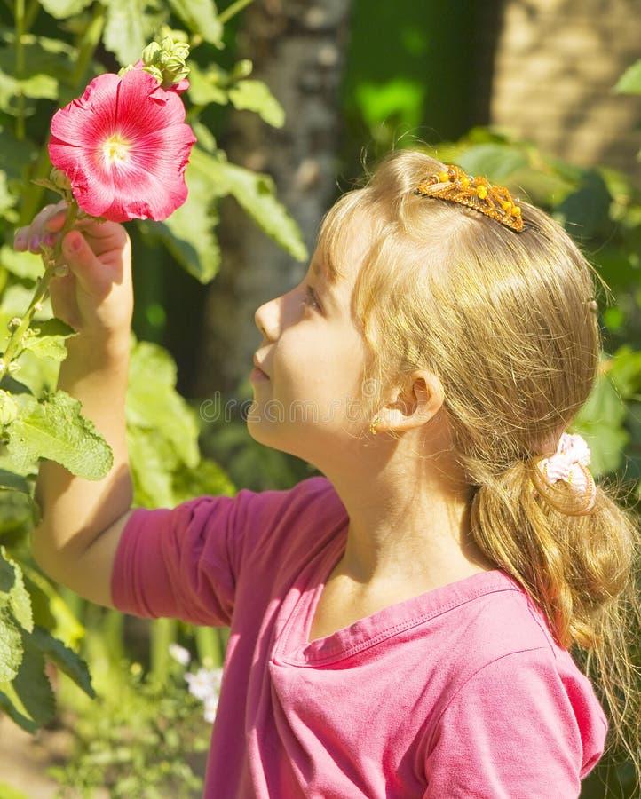Stående av flickan med den röda mallowen royaltyfri fotografi