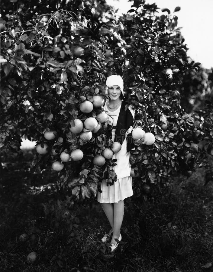 Stående av grapefrukter och anseendet för en ung kvinna hållande i en fruktträdgård (alla visade personer inte är längre uppehäll royaltyfri fotografi