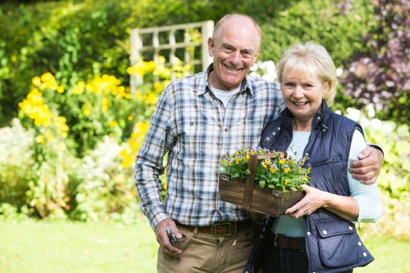 Stående av höga par som tillsammans arbetar i trädgård arkivfoton