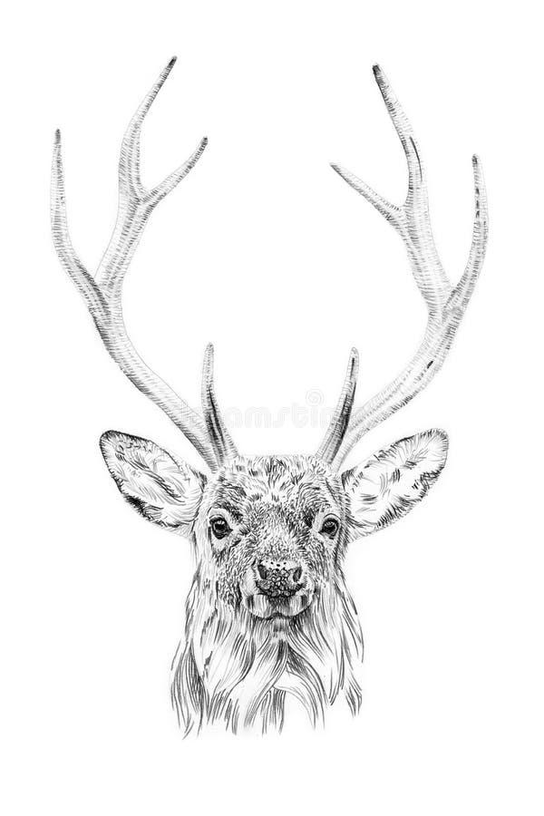 Stående av hjortar som med blyerts dras av handen royaltyfri illustrationer