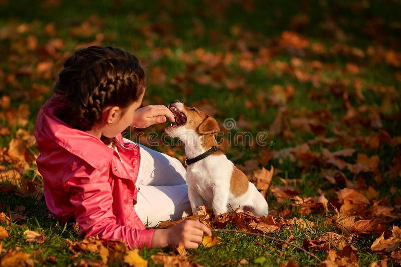 Stående av lite flickan på en bakgrund av suddiga apelsinsidor i en höstlig solig dag royaltyfria bilder