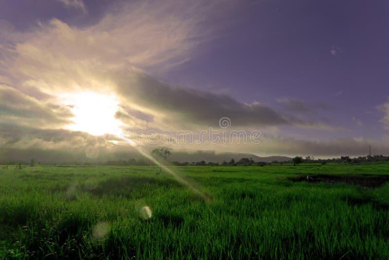Stående av Paddy Field och blå himmel arkivfoto