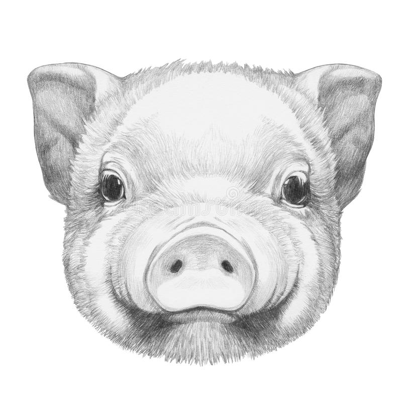 Stående av Piggy royaltyfri illustrationer