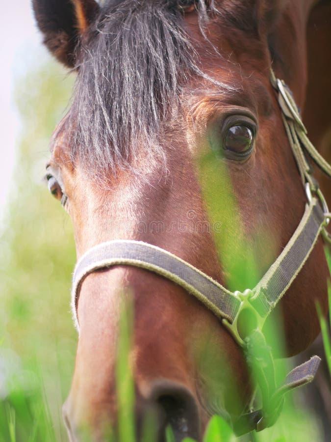 stående för betande häst för closeup trevlig arkivfoto