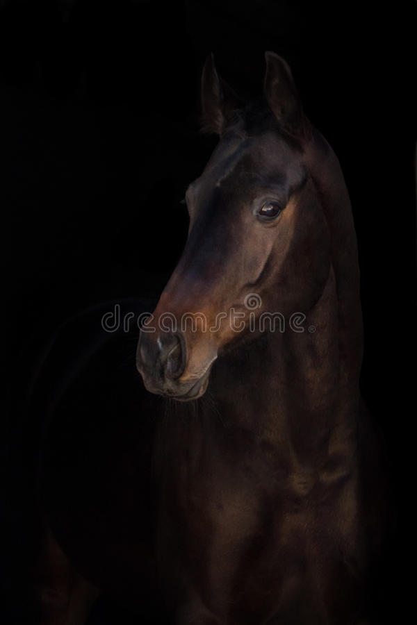 Stående för fjärdhäst royaltyfria foton