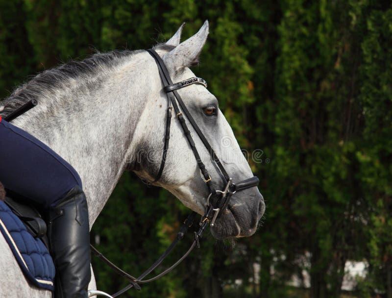 Stående för trän för grå fläckig hästsommar mörk arkivfoton