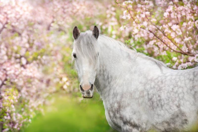 Stående för vit häst i blomning arkivfoton