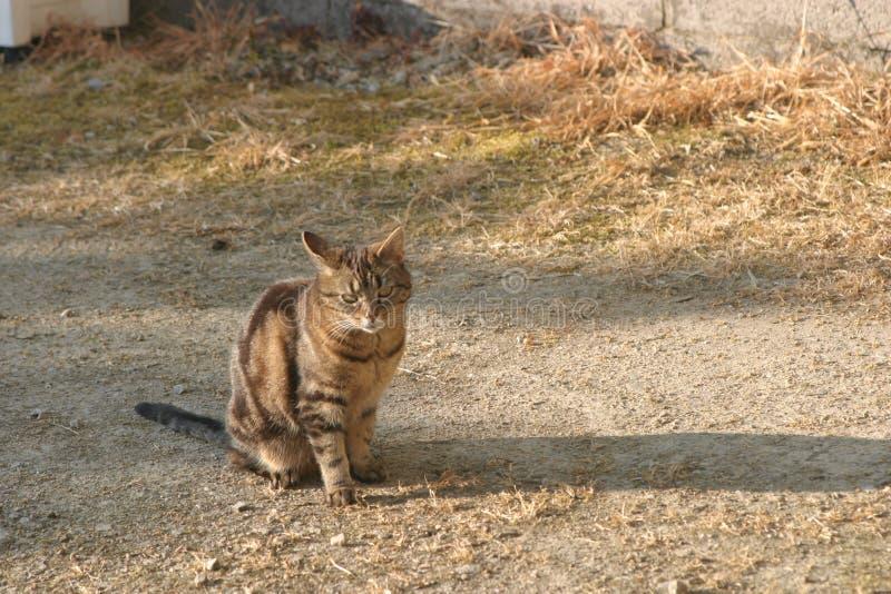 Stående katt i däcket arkivbilder