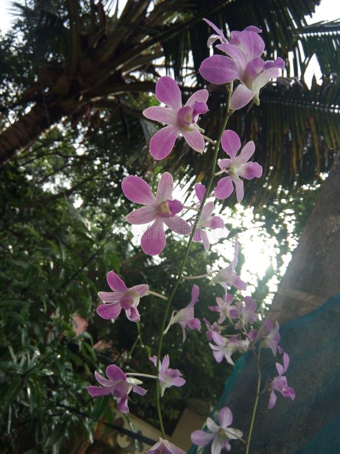 Stående rosa färgblommor royaltyfri fotografi