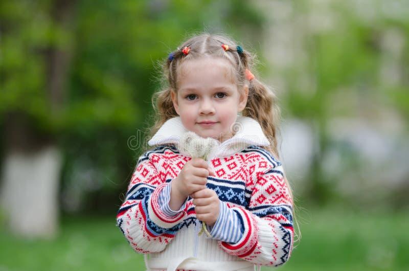 Ståendefyra-år flicka med vita maskrosor för bukett i händerna av arkivbilder