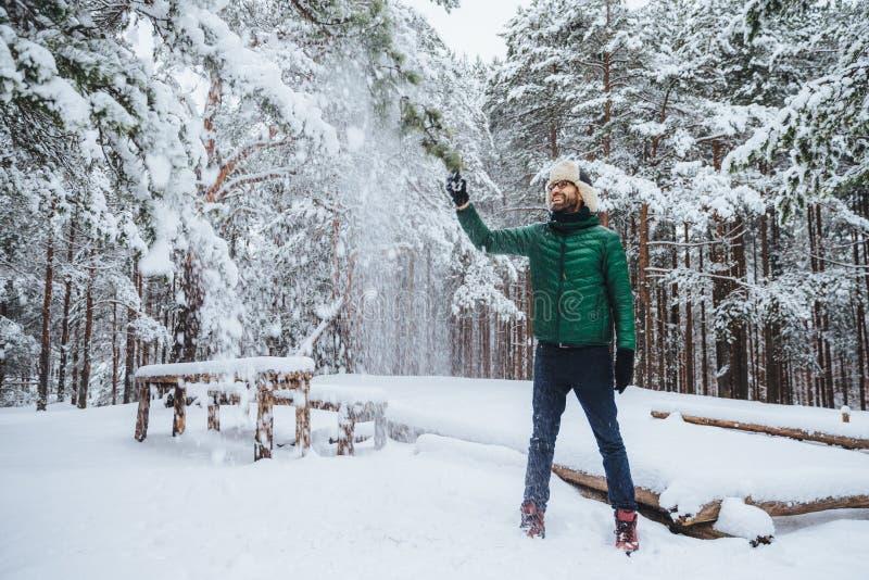 Ståenden av att le iklädd varm kläder för den skäggiga manliga grabben, skakar trädet som täckas med snö, har behagit uttryck, ty royaltyfri foto
