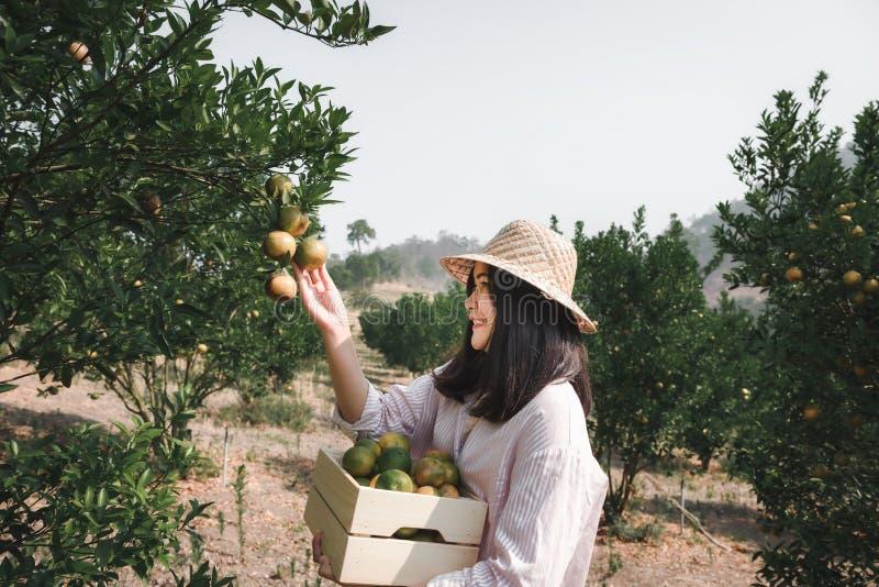 Ståenden av den attraktiva bonden Woman är skördplockningapelsinen i den organiska lantgården, gladlynt flicka i lyckasinnesrörel arkivbilder