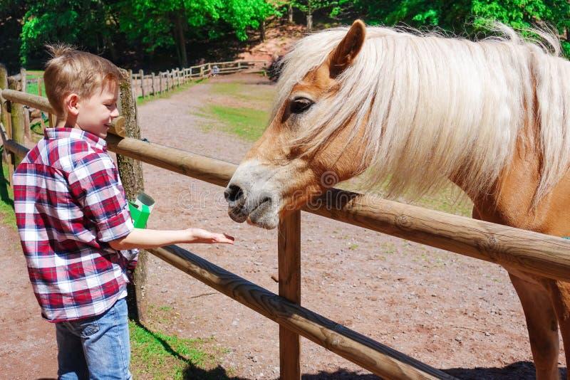 Ståenden av den charmiga tonåringen matar den ljust rödbrun hästen med vit royaltyfria bilder