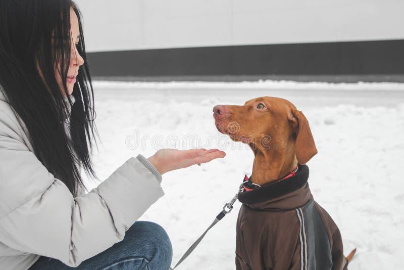 Ståenden av en flicka i varm kläder och en klädd hund på en vinter går, flickan ger hunden en hand arkivfoto