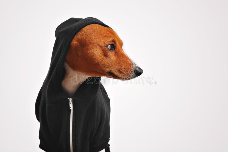 Ståenden av en hund i svart zippered hoodien arkivfoton