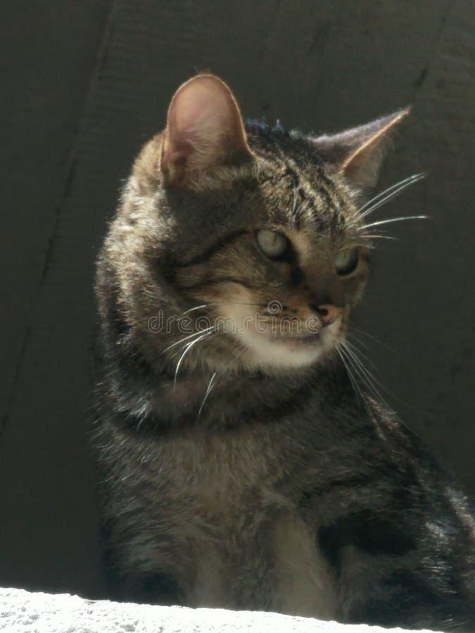 Ståenden av en lös katt halva-vände En barsk blick till sidan arkivbild