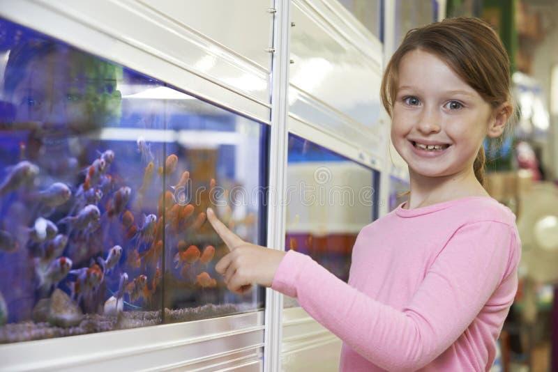 Ståenden av flickan som väljer guldfisken i älsklings-, shoppar arkivfoton