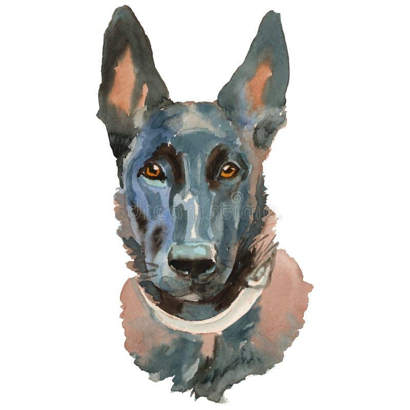 Ståenden för hund för Malinois hundvattenfärg den hand målade stock illustrationer